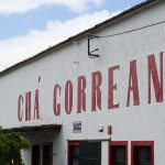Ché Gorreana São Miguel